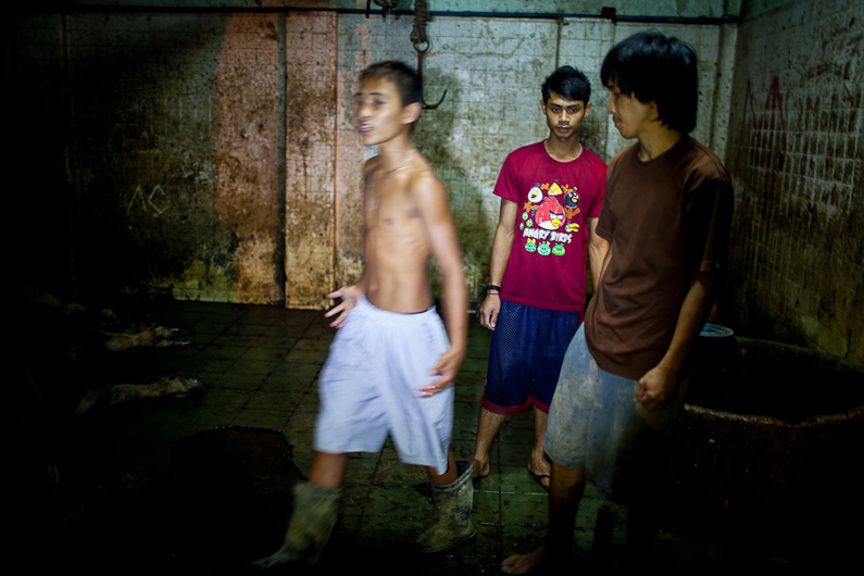 http://peterodriscollphotography.com/files/gimgs/40_lifeblood-27.jpg