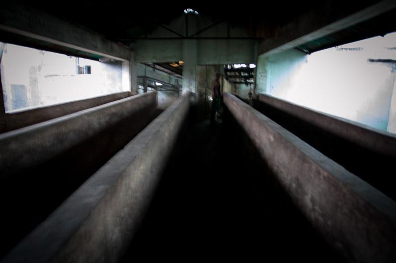 http://peterodriscollphotography.com/files/gimgs/40_lifeblood-4.jpg